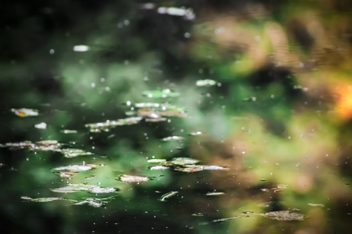 HERMINE,Foliage on the Lake,Photograph on Epson Metallic Photo Glossy,11''x17'' image