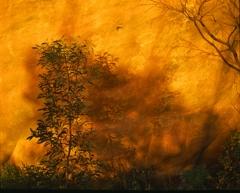 The Burning Bush image