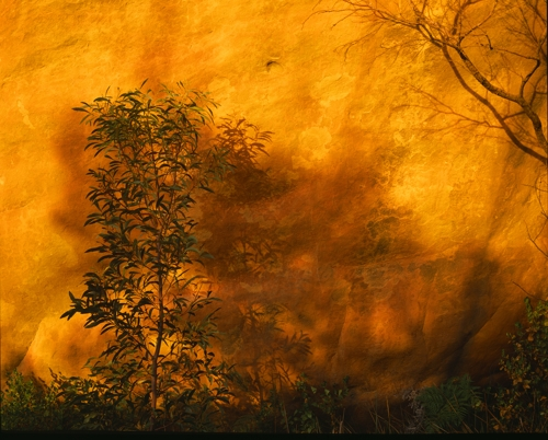 The Burning Bush image