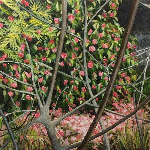 Waratah Lahy, 'Pink Camellias' 2017  image