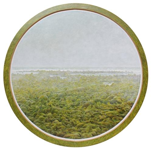 Seaweed image