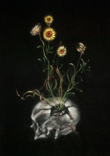 Golden everlasting cranium, 2013 image