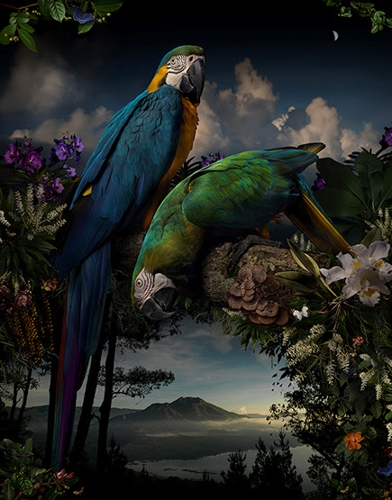 Joseph McGlennon has been announced as the 2015 winner of the William and Winifred Bowness Photography Prize.  image